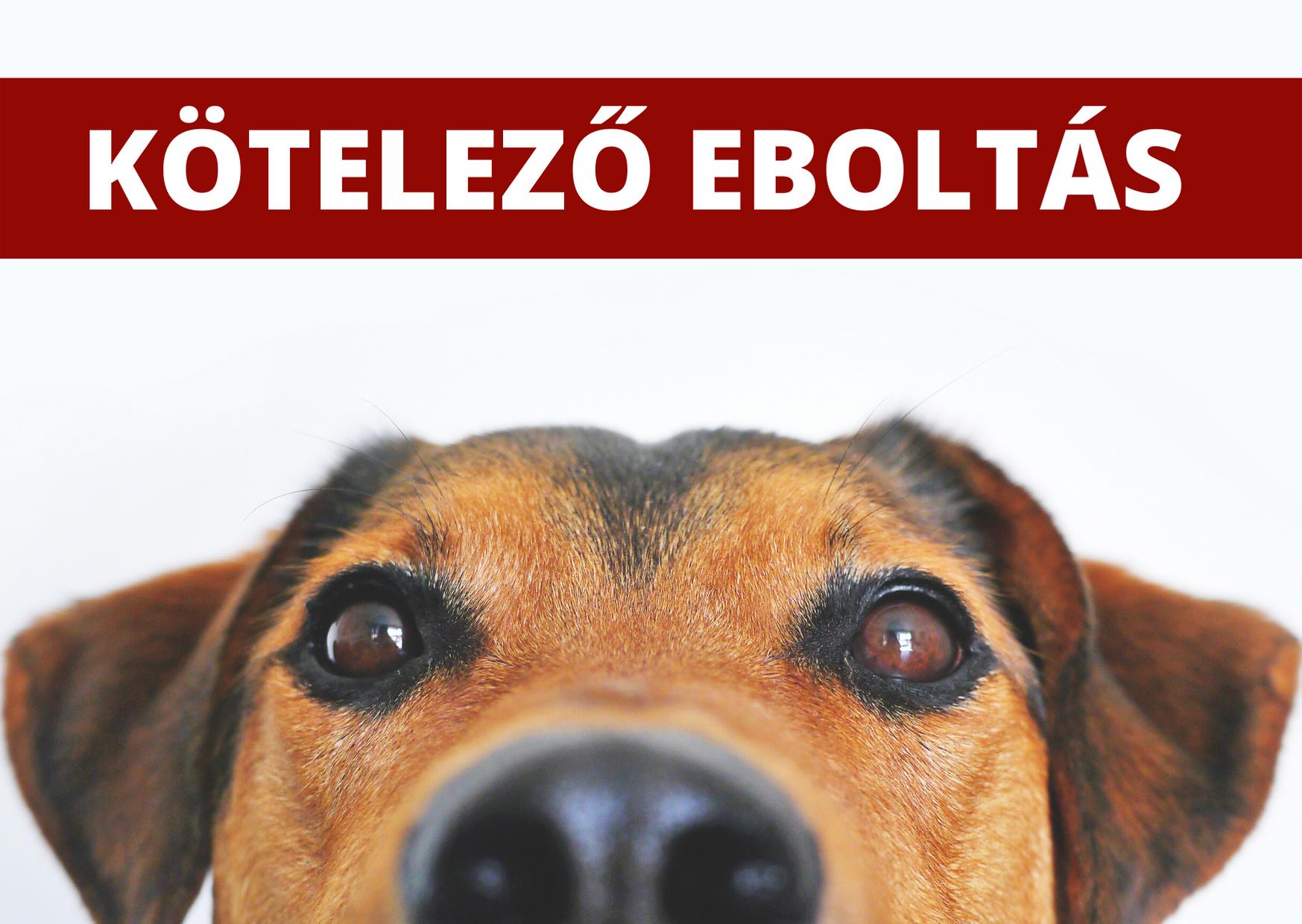 Hirdetmény - kötelező eboltás